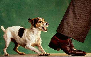 Нападение собаки: причины, действия, варианты защиты